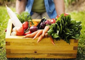 Làm thế nào để bắt đầu sản xuất thực phẩm